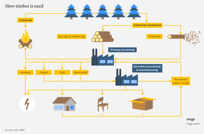 timber lifecycle, sustainable forestry, forests, woodland, timber supply chain